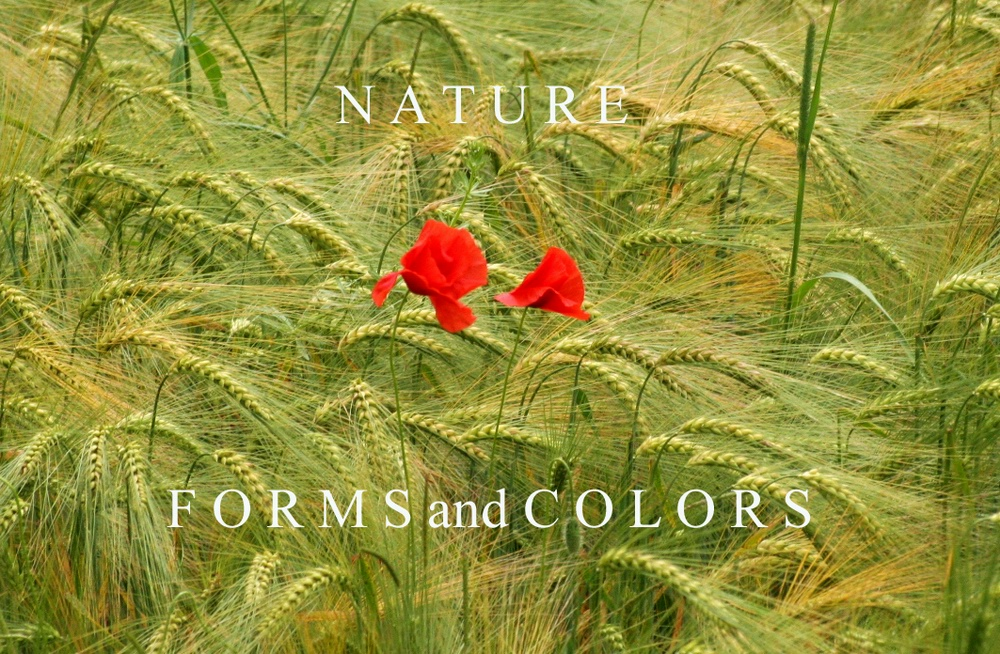nature forms and colors